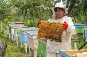 bee grants for individuals 2021